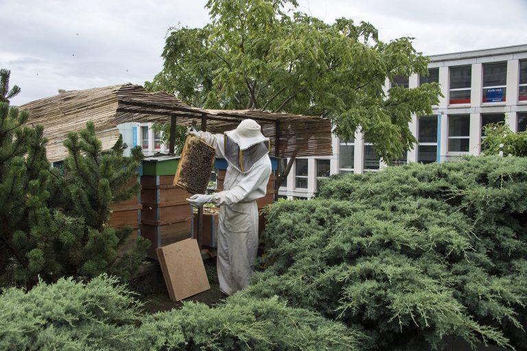 les ruches essaiment en ville le courrier. Black Bedroom Furniture Sets. Home Design Ideas
