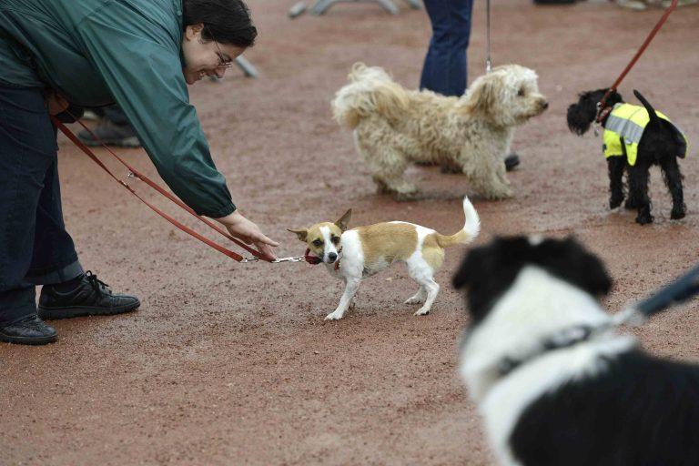 La taxe sur les chiens au panier?